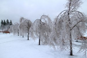 Contact C & D Commercial Services for Snow and Ice Removal Services in Dallas and Fort Worth